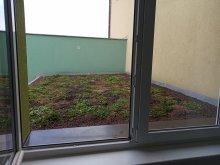 25. Zelená střecha na ZŠ po výsadbě